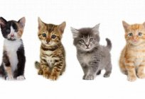 The psychology of cats. People who love cats