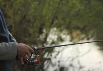 Spinning Salmo: owner reviews, features and types