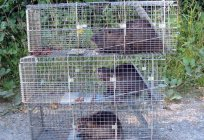 Breeding nutria in the home. The business plan for the breeding of nutria