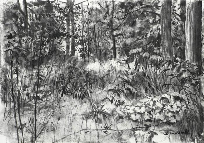 how to draw a forest with a pencil