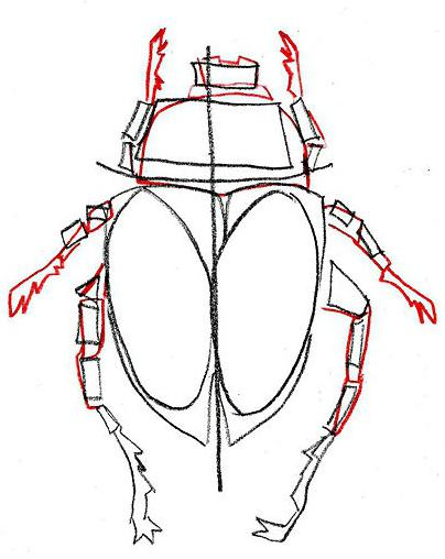 how to draw the beetle gradually