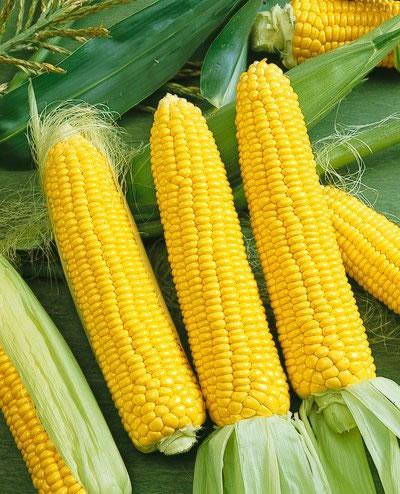 Mais Einfrieren