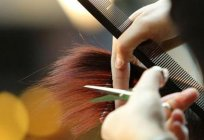 Business beauty salon - a step by step description, features and reviews