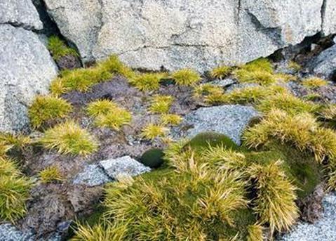 Antarktis Pflanzen