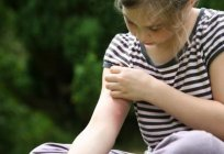 Clove oil against mosquitoes: application, reviews