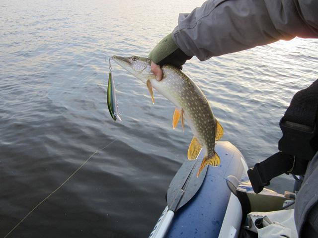 fee fishing in Bryansk region