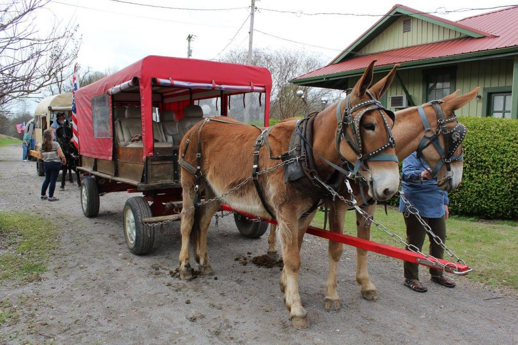 Mating horses: types, preparation, timing  Breeding and