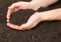 Contamination of human soil and its consequences. Assessment of soil contamination