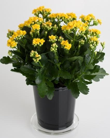 how to care for potted flowers