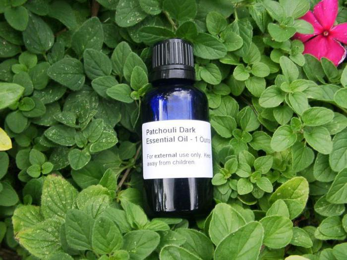 Patchouli oil to attract success and money: reviews, application